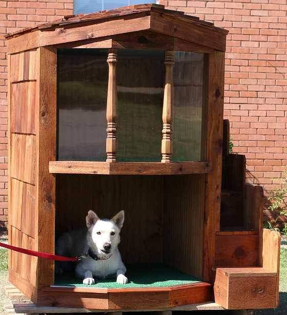 amazing-dog-Haus-2