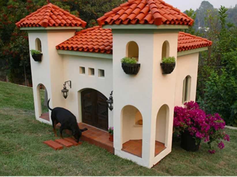 amazing-dog-Haus-4